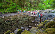 WA14458-00...WASHINGTON - Vicky Spring crossing the North Fork Of The Sol Duc River in Olympic National Park.  (MR# S1)