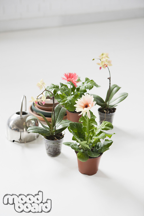 Four potted flowers and watering can on floor