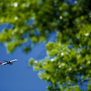 A Plane flies across the sky framed by trees in the foreground