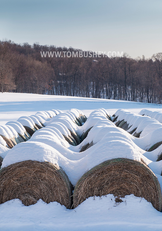 Hamptonburgh, New York - Snow-covered bales of hay are lined up in a field on Feb. 20, 2015. ©Tom Bushey / The Image Works