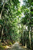 Estrada em área de preservação no Parque Malwee. Jaraguá do Sul, Santa Catarina, Brasil. / Road crossing a forest at Malwee Park. Jaragua do Sul, Santa Catarina, Brazil.