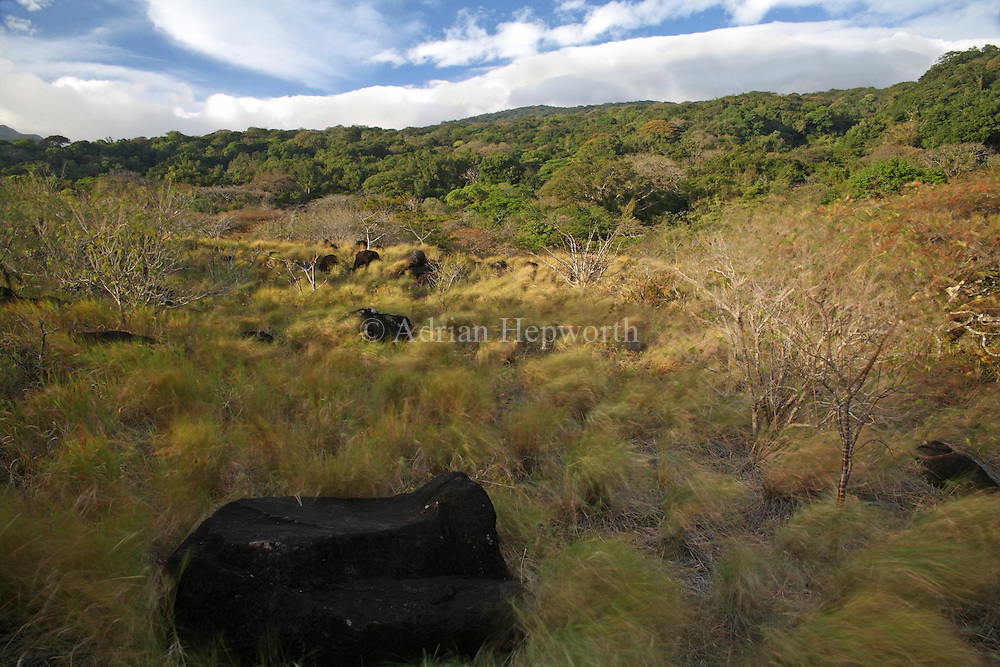 Volcanic boulders. Rincon de la Vieja National Park, Guanacaste, Costa Rica. <br />