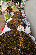 18 JUNE 2013 - YANGON, MYANMAR:    Insects for sale as food in a market in Yangon. The UN FAO and European Union have both issued reports in 2012 and 2013 that suggest eating more insects could be an affordable and healthy sources of protein and doesn't do the environmental damage that commercial production of traditional meats, like cattle and chicken.    PHOTO BY JACK KURTZ