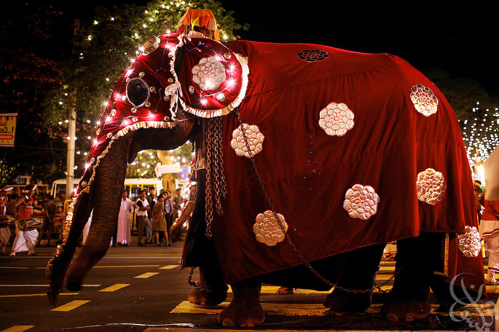 An elaborately costumed elephant marches in the Kandy Perahera outside the Temple of the Tooth (Dalada Maligawa) in Kandy, Sri Lanka August 12, 2008. The Perahera is an annual celebration in which a hundred elephants, and groups of dancers, drummers  and acrobats take part in a procession that includes a replica of the casket that contains the tooth relic..