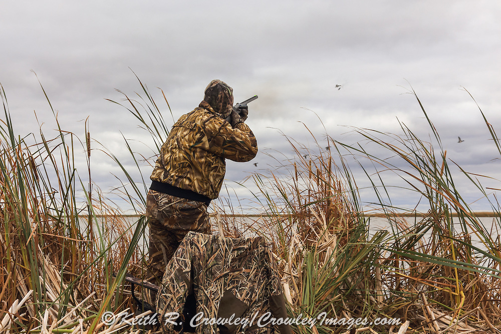 Photo No 5 of series - Hunter kills canvasback drake on open water marsh.