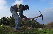 A farmer works on his plot on the island of Anafi, Greece on October 18, 2002. Greece, a member of the European Union, has the highest dependancy on agriculture for employment which makes up 20 percent of the total workforce. Photo by Jakub Mosur