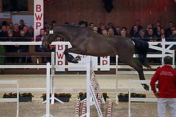 056, Pegasus vh Maarlo<br /> Hengstenkeuring BWP - Lier 2018<br /> © Hippo Foto - Dirk Caremans<br /> 19/01/2018