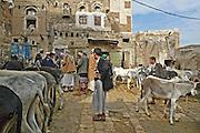 Donkey Market in Sanaa