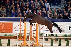 004, Kentucky GP<br /> KWPN Stallionshow - 's Hertogenbosch 2018<br /> © Hippo Foto - Dirk Caremans<br /> 31/01/2018