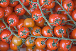 Close up of vine tomatoes,