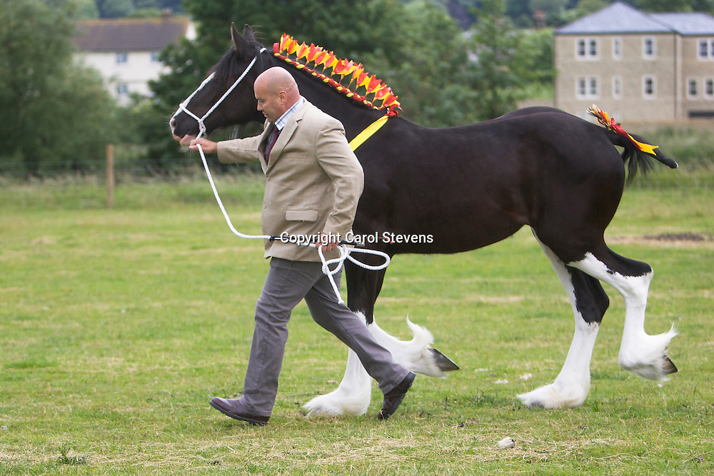 Mr J Cross &amp; Miss N Cross's Black Filly  Crossingtons Inkatink  f 2012<br /> s  Penrhos Brave Heart<br /> d  Westfield Lucky Charm<br /> Bred by owner