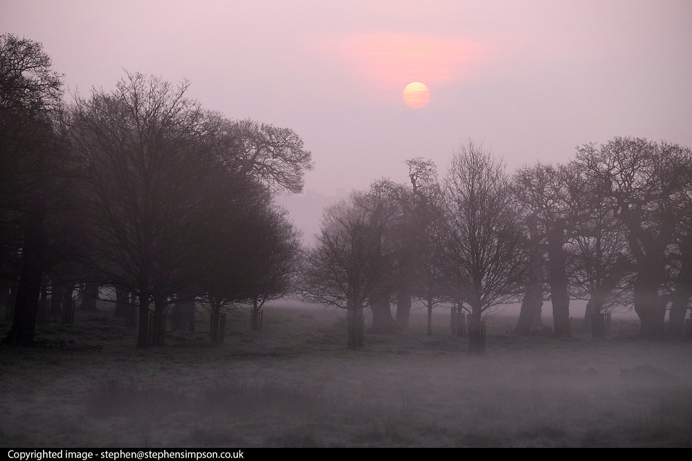 © Licensed to London News Pictures. 08/04/2015. Richmond, UK Sunrise in Richmond Park, West London today 8th April 2015. Photo credit : Stephen Simpson/LNP