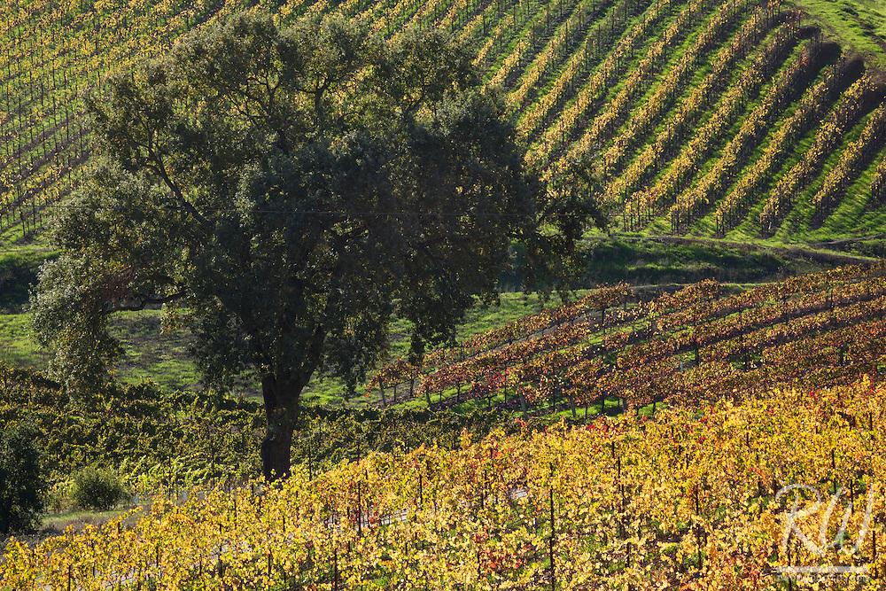 MacRostie Vineyards, Russian River Valley AVA, California