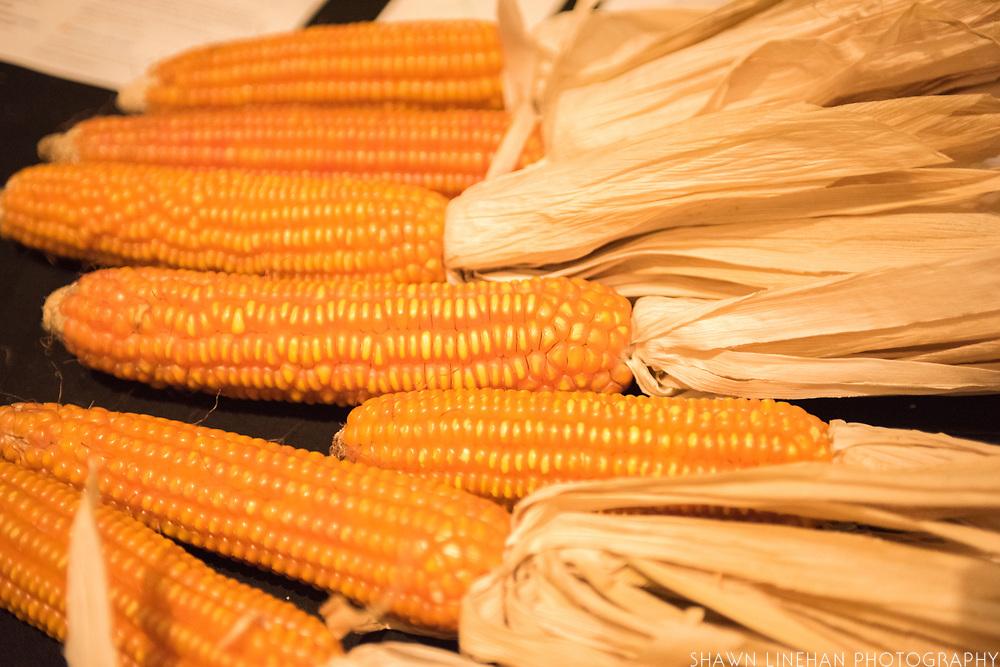 TOMATO, Solanum lycopersicum<br />Showcase: &lsquo;Damsel&rsquo; F1<br />Breeder: Jason Cavatorta, EarthWork Seeds<br />CORN (FLINT), Zea mays<br />Showcase: &lsquo;Nalo Orange&rsquo; OP<br />Breeders: Jay Bost, GoFarm Hawai&rsquo;i<br />Chef: David Gunawan, Farmer&rsquo;s Apprentice. Dish: &lsquo;Nalo Orange&rsquo; grits cooked in goats milk with raw and cooked &lsquo;Damsel&rsquo; tomato.