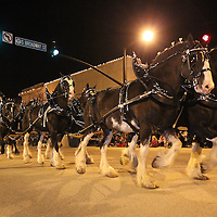 Adam Robison | BUY AT PHOTOS.DJOURNAL.COM<br /> The Clydesdales make their way through the Tupelo Christmas Parade Friday night in Tueplo.