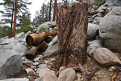 San Jacinto Mountains - Trail Area