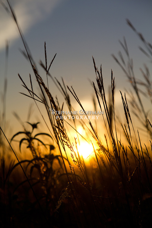 Sun shining through the prairie grass at Voas Nature Area near Minburn, Iowa