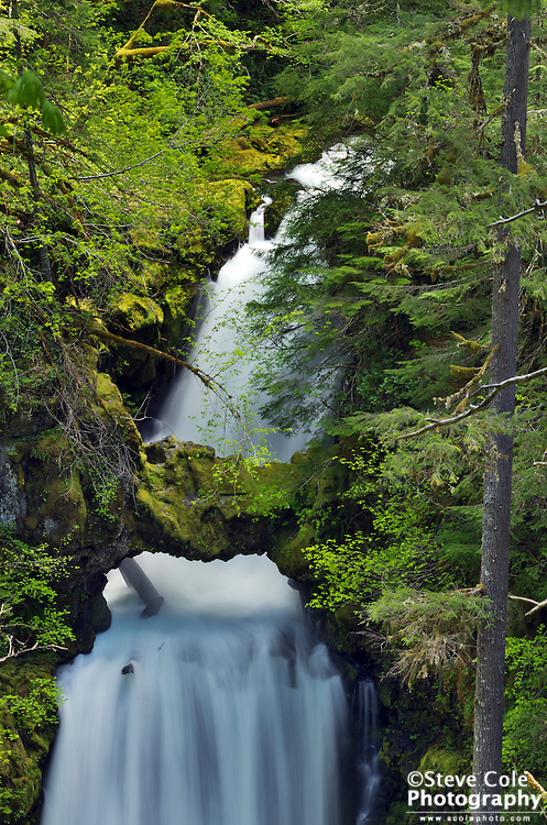 Curly Creek Falls - Lewis River Valley