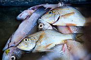 Fish in Bariay, Holguin, Cuba.