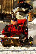 3/3/2007:  Anchorage Alaska -  A course hand laughs after falling into the trailing sled of Rookie Richard Hum of Talkeetna, AK during the Ceremonial start of the35th Iditarod Sled Dog Race.  The course hand would roll out of the sled unharmed and to the cheers of the crowds on 4th Avenue.