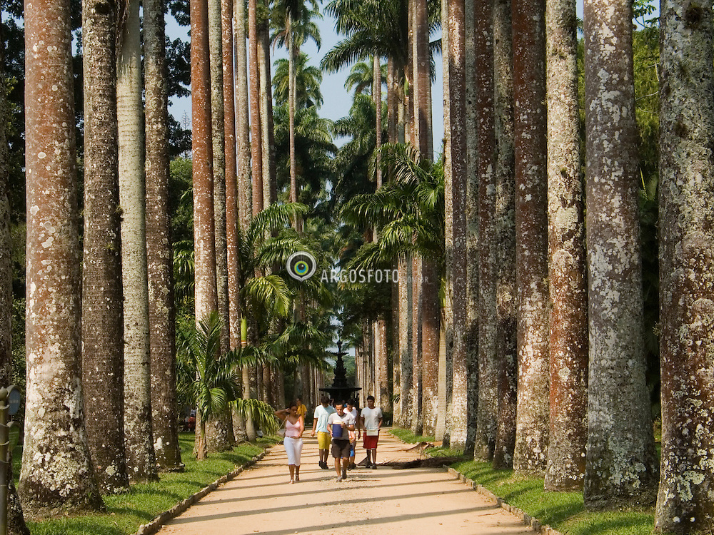 Rio de Janeiro, RJ, Brasil    01/Maio/2006.Palmeiras Imperiais do Jardim Botanico do Rio de Janeiro, Instituicao criada com a chegada de D.Joao VI ao Brasil, em 1808, um dos 10 mais importantes do mundo, abriga cerca de 8200 especies raras da flora brasileira e estrangeira. Verdadeiro santuario ecologico/Imperial palm trees in Rio de Janeiro Botanical Gardens, one of the ten most important in the world. unded on 13 June 1808. They have also been recognized internationally as a Living Museum in the area of Botany and defined by UNESCO as one of the reserves of biosphere. Among the approximately 8200 specimens of the gardens' live collection..Foto Marcos Issa/Argosfoto