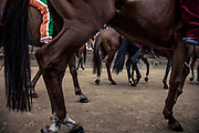 Italy, Siena, the Palio: the horses enetered the square ready for the race. At the shot of the mortaretto, the horses come out of the Entrone and line up at the starting line, known as the mossa. As soon as the last horse reaches the starting line the race begins and lasts for three rounds of the square (about 1 kilometre in total). The first horse to cross the finishing line is the winner, regardless of whether it is still mounted.