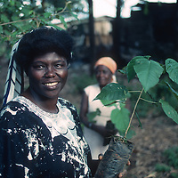 Wangari Maathia, founder of the Green Belt Movement in Kenya, at her tree nursery near Nairobi (March 1990.) Maathai was awarded the Nobel Peace Prize in 2004. She died on September 25, 2011.