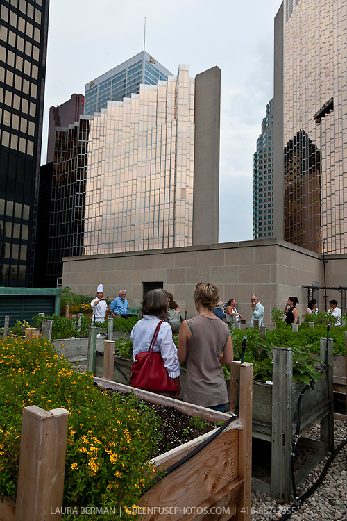 The members of Cusine Canada tour the rooftop herb garden at the Royal York Hotel, Toronto, Canada.