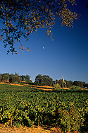 Moon over vineyards at MonteVina Winery, near Plymouth, Shenandoah Valley, Amador County, California