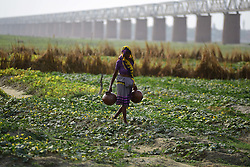 April 17, 2018 - Allahabad, Uttar Pradesh, India - A women carrying water in pots to irrigate her field on a hot day in Allahabad. (Credit Image: © Prabhat Kumar Verma via ZUMA Wire)