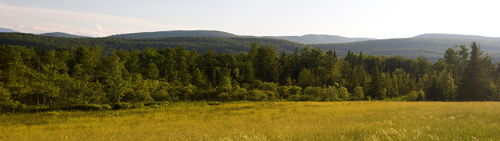 View of forest and Bowen Mountain from a field on VT 118 in Eden, Vermont.  Green Mountains.