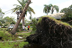 September 12, 2017 - St. Petersburg, Florida, U.S. - Arborist PAUL MYSLIWIEC climbs a tree that fell at 1200 86th Ave N on Tuesday. A tree had fallen on the homeowners roof and they called the tree service to remove it. (Credit Image: © Eve Edelheit/Tampa Bay Times via ZUMA Wire)
