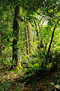 A forested area near Point Reyes, California.