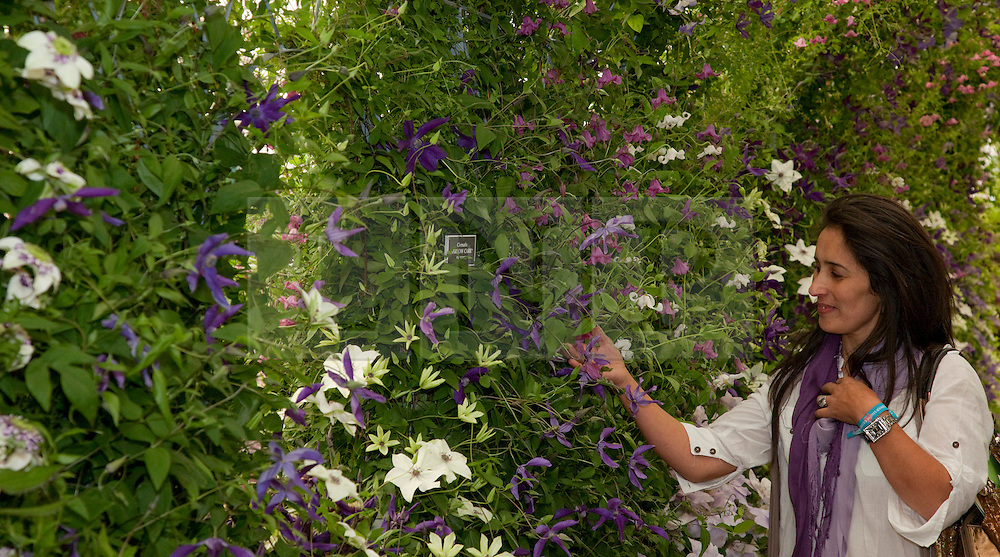 © licensed to London News Pictures. LONDON, UK  23/05/2011. Chelsea Flower Show, Press Day. Gardener inspecting display.  Please see special instructions for usage rates. Photo credit should read Bettina Strenske/LNP