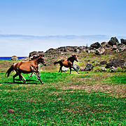 "The wild horses of Rapa Nui and their horsemen, ""los jorgos"". Mass tourism and ancient traditions trying to exist together in peace."