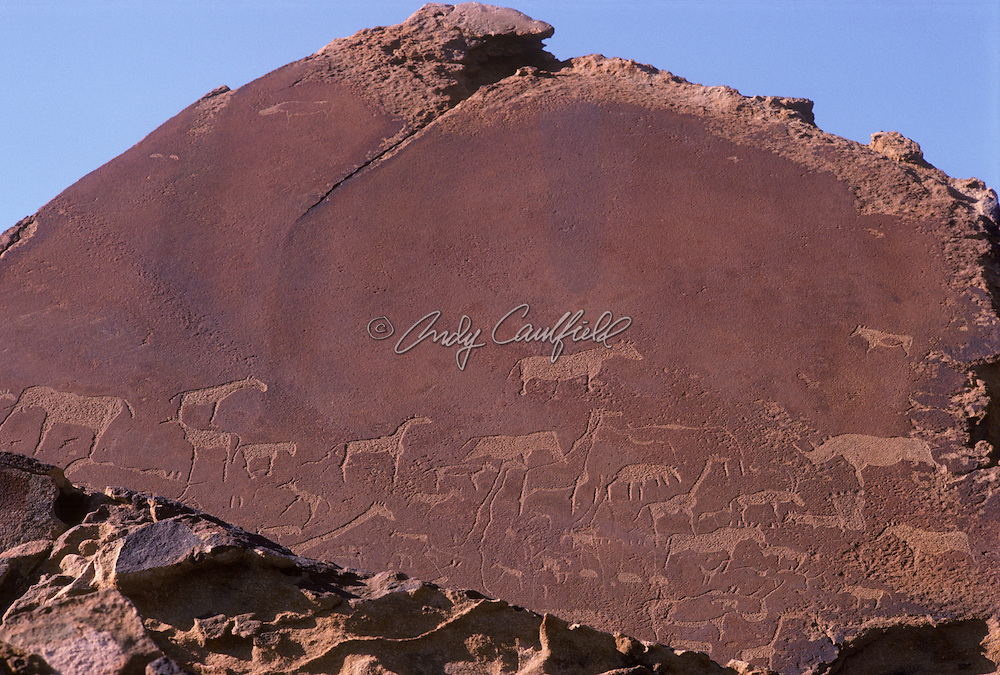 Animal petroglyphs at Twyfelfontein, images include; giraffe, elephant, rhino and others animals The Brandberg, Namibia, Africa