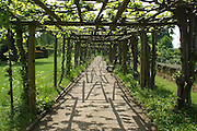 An intriguing graphic pattern of shadows cast on the ground by the pergola timbers and the emerging foliage of the grape vine which they support.<br />