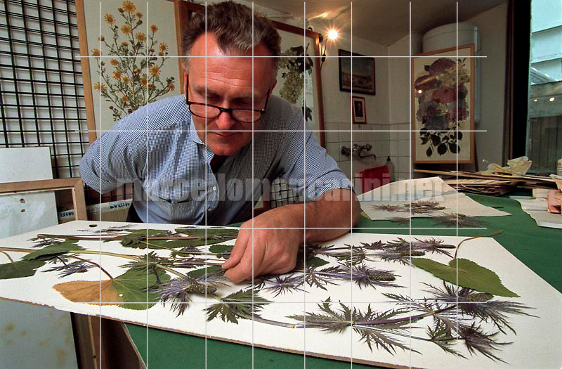 Turin, December 6, 2000. British artist Stuart Thornton in his studio where he composes his botanicals / Torino, 6 dicembre 2000. L'artista inglese Stuart Thornton nel suo studio dove compone i suoi erbari - © Marcello Mencarini