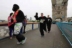 © Licensed to London News Pictures. 21/09/2013. Gorillas run around central London for charity. The 7km route takes the fun runners over Tower Bridge, along Bankside and back to the City of London. The annual Great Gorilla Run raises funds for gorillas. Medals were handed out by Bill Oddy. Credit : Rob Powell/LNP