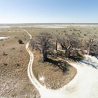 Africa, Botswana, Nxai Pan National Park, Aerial view of sandy track leading to Baines Baobabs at edge of Makgadikgadi Pan within Kalahari Desert