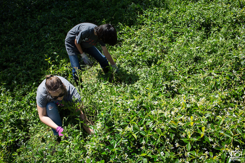 Jessica Dunn, left, and Nicholas Chu remove weeds from a planter box during the Earth Day clean up activities at Milpitas High School in Milpitas, California, on April 23, 2016. (Stan Olszewski/SOSKIphoto)