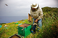 Home-made honey is an important factor in Ikarian diet, beeing part of it for many centuries, and contribuited to the local impressive longevity