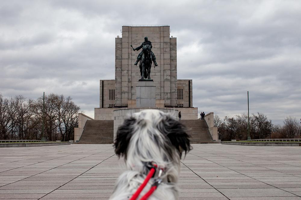 """English Setter """"Rudy"""" am 12.12. 2017 vor dem Jan Zizka Monument im Park """"Vitkov"""" im Prager Stadtteil Zizkov. Rudy wurde Anfang Januar 2017 geboren und ist gerade zu seiner neuen Familie umgezogen."""
