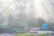 63821-23703 Sun rays in fog in flower garden, Marion Co., IL