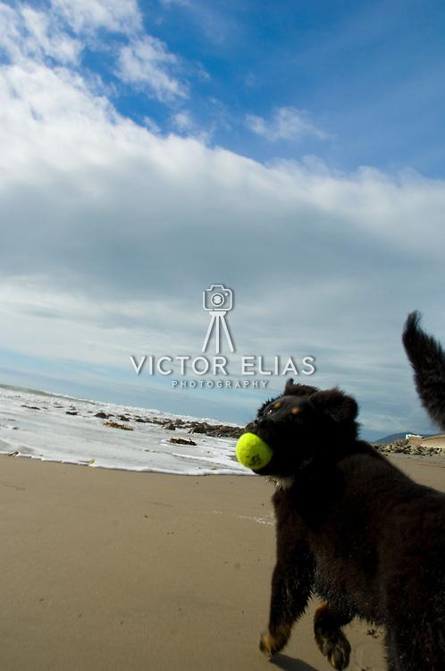 Mateo playing on state park beach near Ventura, CA. USA.