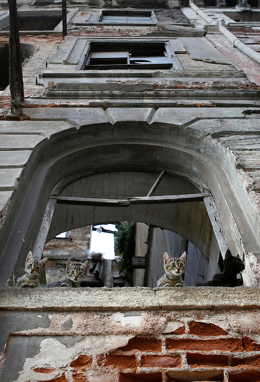 Stray cats sitting on the window of a building in Istanbul, Turkey. Beyoglu district also known as Pera includes  neighborhoods like Galata,  Karakoy,  Tepebasi, Tarlabasi, Dolapdere and Kasimpasa, and is connected to the old city center across the Golden Horn through the Galata Bridge and Unkapani Bridge. Beyoglu is the most active art, entertainment and night life center of Istanbul.