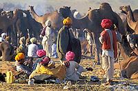 Inde, Rajasthan, Foire aux chameaux de Pushkar // India, Rajasthan, Pushkar camel festival