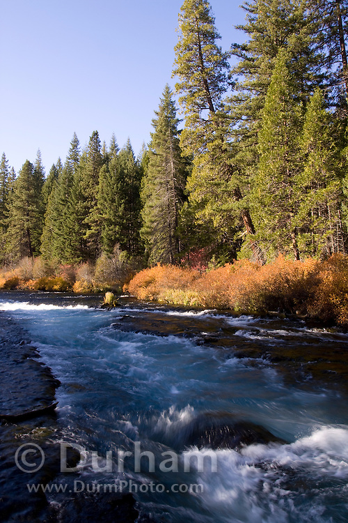 The Metolius River in the Deschutes National Forest, Oregon.