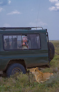 Safari visitors photograph a lioness at close range, Serengeti National Park, Tanzania