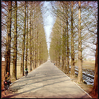 An empty tree-lined highway near Kaesong, in rural North Korea.